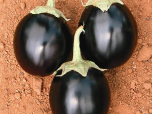 tokita-prodotti-eggplant