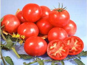 tokita-prodotti-tomato